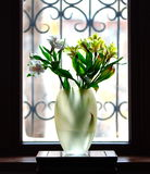 Vase with iris flowers in front of window Royalty Free Stock Image