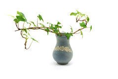 Vase with ivy 2 Stock Images