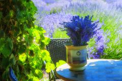 Lavender on a garden table. A vase of lavender sits on a garden table under a vine covered arbor with a field of lavender in the background Stock Photos