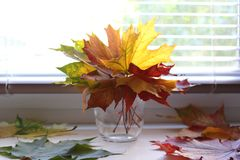Vase with leaves Royalty Free Stock Photography