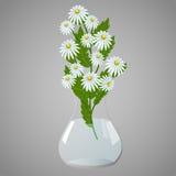 Vase mit Gänseblümchen stockbilder