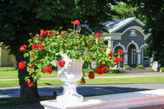 Vase mit roten Blumen Stockfoto