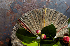 Vase from newspapers with camelia plant on a rusty table. Stock Photography