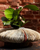 Vase from newspapers with camelia plant. Stock Images