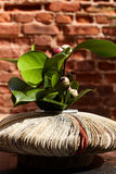 Vase from newspapers with camelia plant. Royalty Free Stock Images
