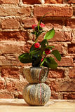 Vase from newspapers with camelia plant on a wooden table and wa Royalty Free Stock Photo