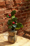 Vase from newspapers with camelia plant on a wooden table and wa Royalty Free Stock Photos