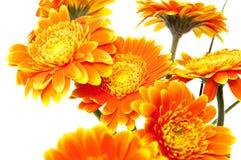 Free Vase Of Orange Flowers Stock Image - 39873711