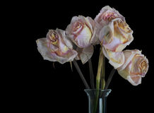 A Vase of Old Roses Stock Photography