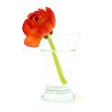 Vase with orange flower Stock Photography