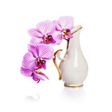 Vase with orchid Stock Photo