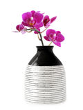 Vase with orchid flower Stock Image