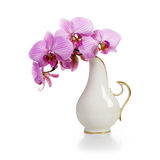 Vase with Orchid Stock Photography