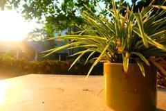 Vase pendant le matin Images stock