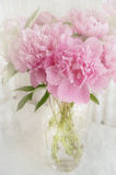 Vase of peonies Stock Photos