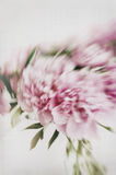 Vase of peonies Stock Images