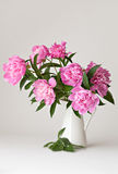 Vase of peony blooms Stock Photos