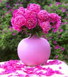 Vase of pink peonies. On the table Stock Photos
