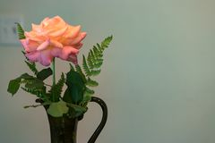 Vase with pink rose Stock Photo