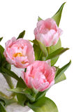 Vase of pink tulips from above Royalty Free Stock Photo