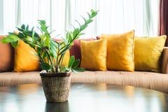Vase plant Royalty Free Stock Photos