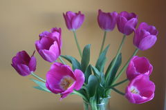 Vase of purple tulip flowers. A beautiful bouquet of flowers, purple tulips Stock Photo