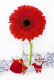 Vase of red Gerber Daisy. Isolated on white Royalty Free Stock Photos