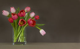 Vase of red and pink tulips - dark brown backgroun. Vase of red and pink tulips on table - dark brown background Stock Photo