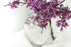 Vase of Redbud Blossoms on Snowy White. Vase of fresh redbud blossoms on white satin Royalty Free Stock Images