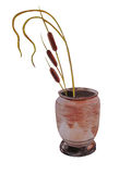 Vase with reed Mace Stock Photo