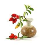 vase rose à crabot Image stock
