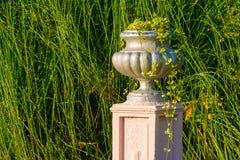Vase closeup in Arboretum, Sochi, Russia. Vase with scindapsus closeup on the background of pampas grass in Arboretum in sunny uatumn day, Sochi, Russia Stock Photo