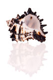 Vase Seashell Stock Image