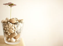 Vase with stones Stock Photos