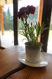 Vase on the table with carnations. In the background is a window overlooking the mountains. stock image