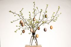 Easter eggs. Vase with tree branches and multicolored hand painted easter eggs stock photos