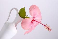 vase tropical à fleur Photographie stock libre de droits