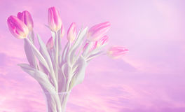 Vase of tulips with dreamy colours and soft pink background Stock Photo