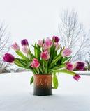 Vase Tulpen lizenzfreie stockbilder