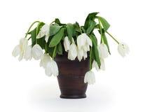 Vase voll von herabhängendem und von verwelkten Blumen Lizenzfreie Stockfotos