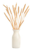 Vase of Wheat on White Royalty Free Stock Photo