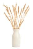 Vase of Wheat on White Royalty Free Stock Photo
