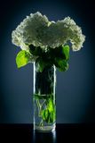 Vase with white flowers on a dark background Royalty Free Stock Photo