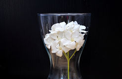 Vase with white oleander Stock Photography