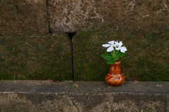 Vase of white vinca. The vase of white vinca is on the boundary near the fence Royalty Free Stock Photography
