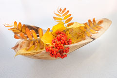 Vase from the wood with autumn leaves and bunches mountain ash Royalty Free Stock Image