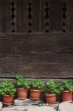 Vaser med gröna växter bredvid ett traditionellt trästaket Royaltyfri Bild