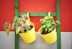Vases Stock Photography