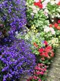 Vases avec les fleurs colorées dans la boutique photographie stock libre de droits