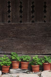 Vases avec les plantes vertes à côté d'une barrière en bois traditionnelle Image libre de droits